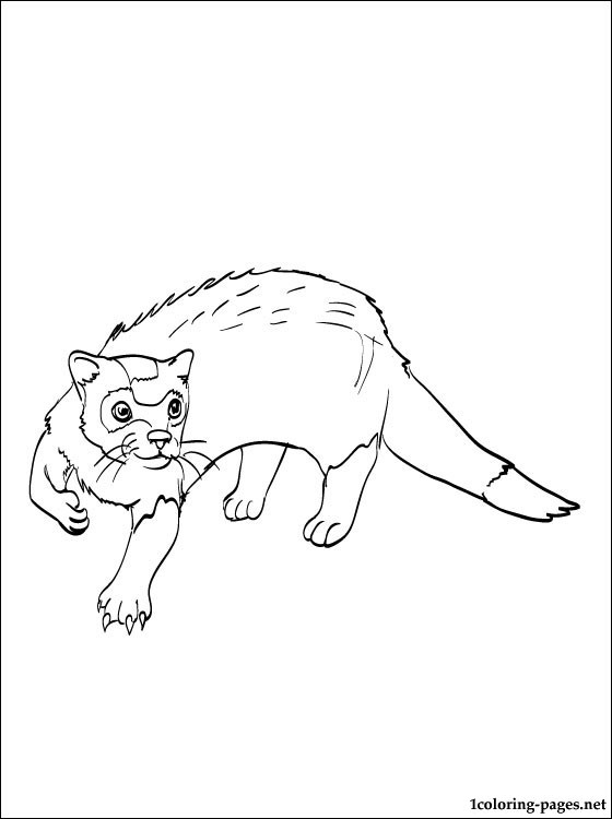 Polecat Printable And Coloring Page Coloring Pages