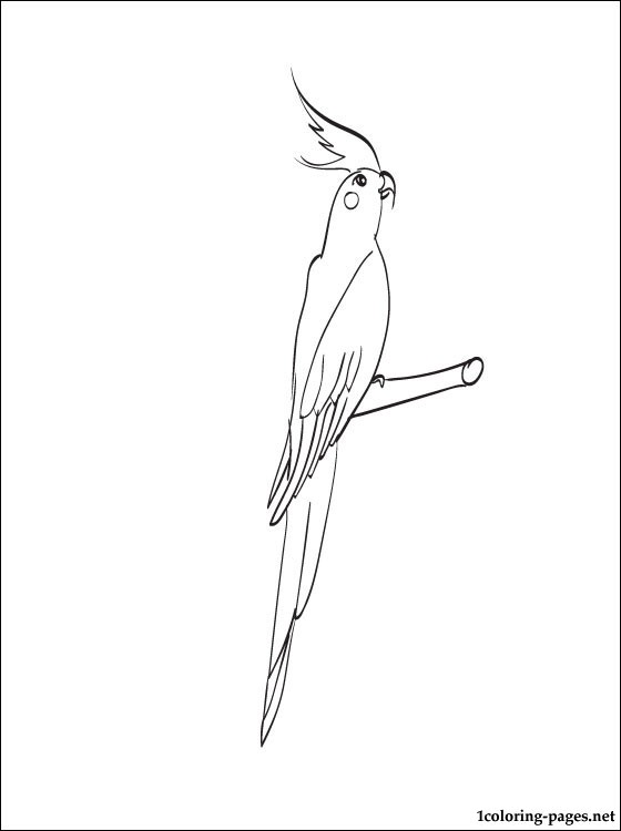 Cockatiel Coloring Page For Children Coloring Pages
