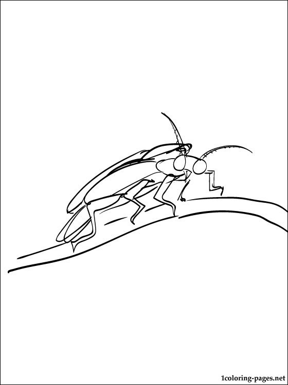 firefly coloring page # 54