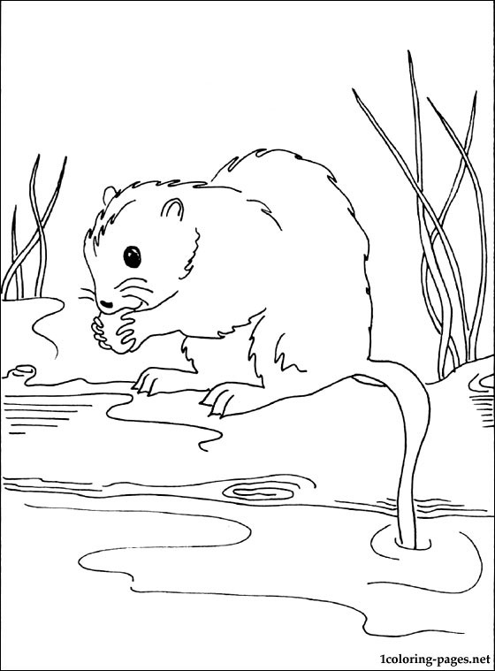 Muskrat Printable And Coloring Page Coloring Pages