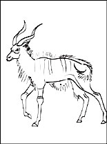 Coloring Page Nyala Coloring Pages
