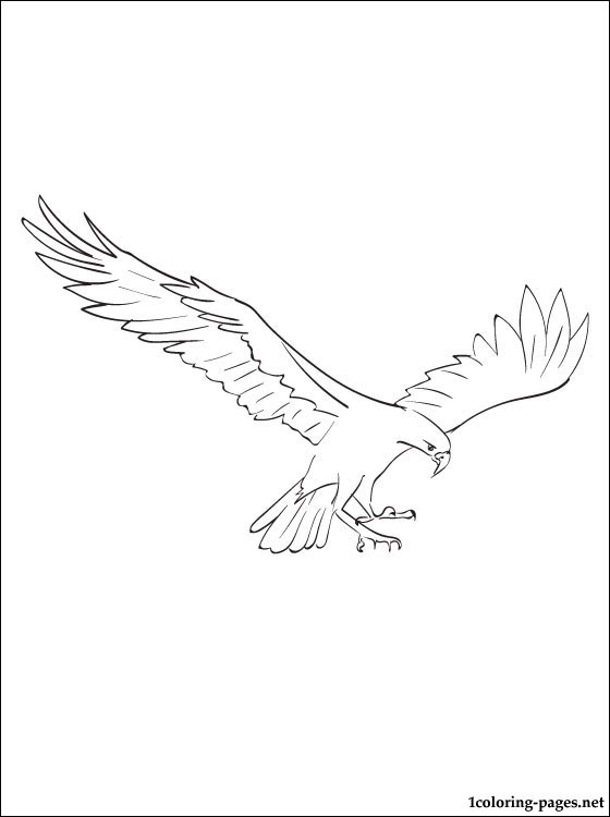 Osprey Coloring Page Coloring Pages