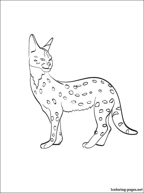 Serval Printable And Coloring Page Coloring Pages