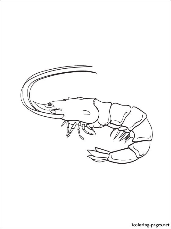 Coloring Page Shrimp Coloring Pages