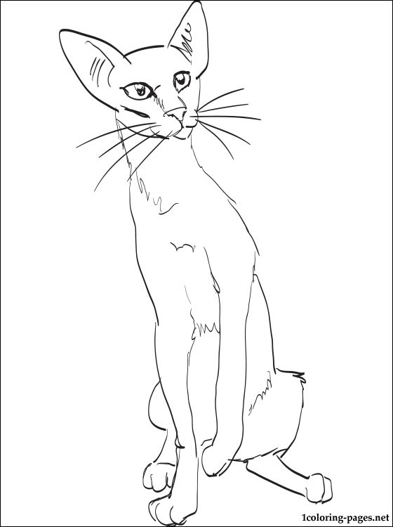 Oriental Shorthair Cat Coloring Page Coloring Pages