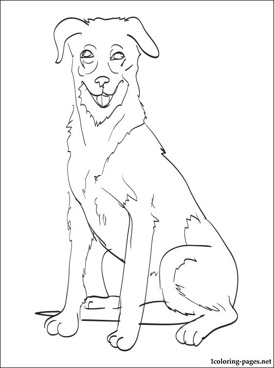 Beauceron Coloring Page Coloring Pages