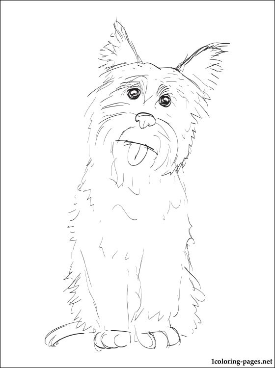 Cairn Terrier Coloring Page Coloring Pages