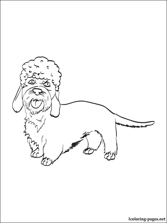 Dandie Dinmont Terrier Coloring Page Coloring Pages