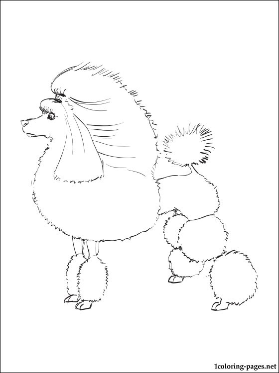 Poodle coloring page  Coloring pages