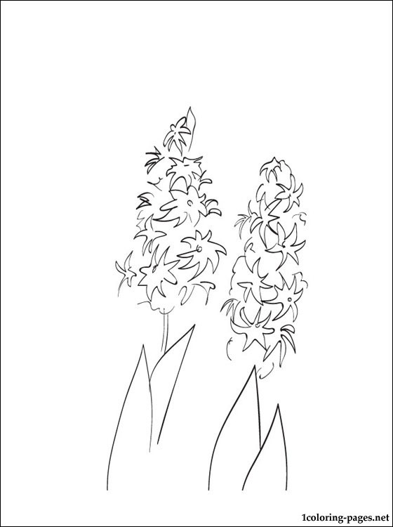 Hyacinth printable and coloring page coloring pages, love birds coloring pages