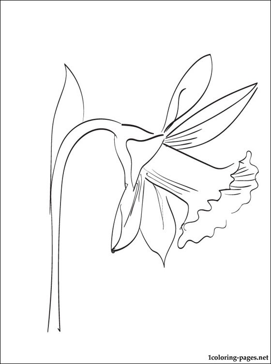 Narcissus Coloring And Printable Page Coloring Pages