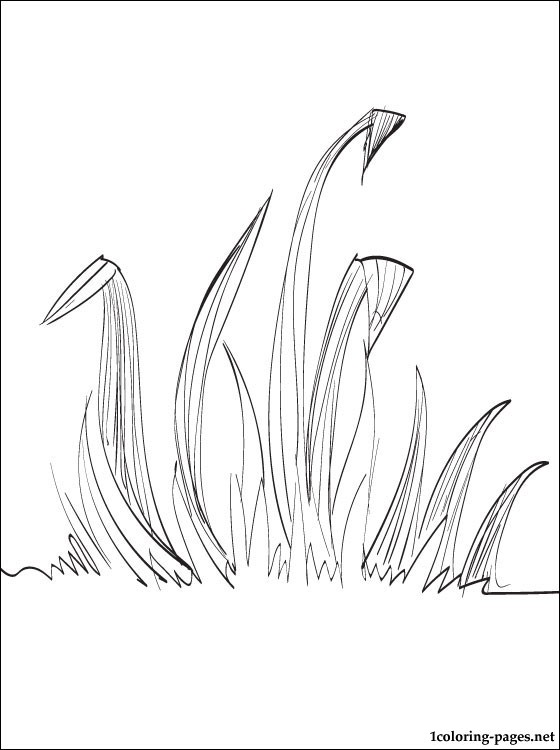 grass coloring page  coloring pages