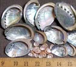 abalone shells