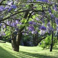 Primavera en el hemisferio sur…