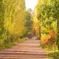 El camino de la Alameda y del alma...
