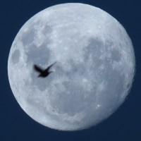 Lunas... Moons...