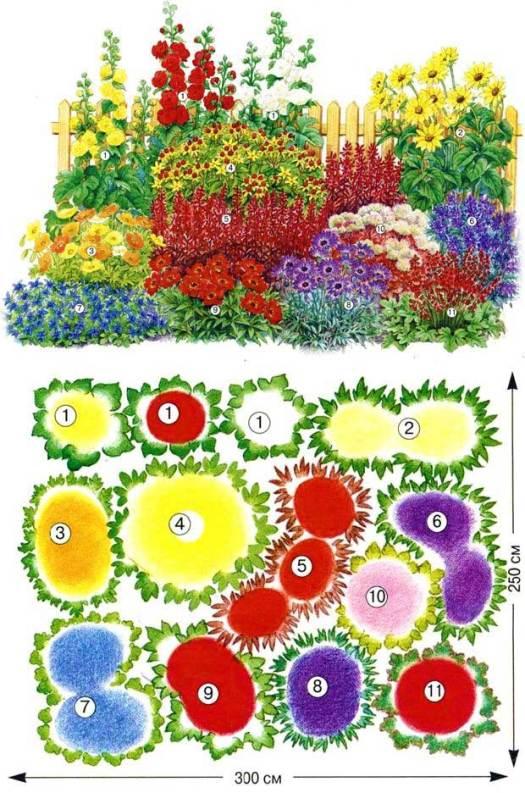 Схема цветника для начинающих