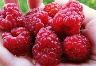 Чтобы в ягодах малины не было червей