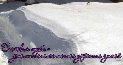 укрытие роз снегом