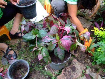 посадка растений на клумбу