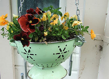 ампельные растения фото 4
