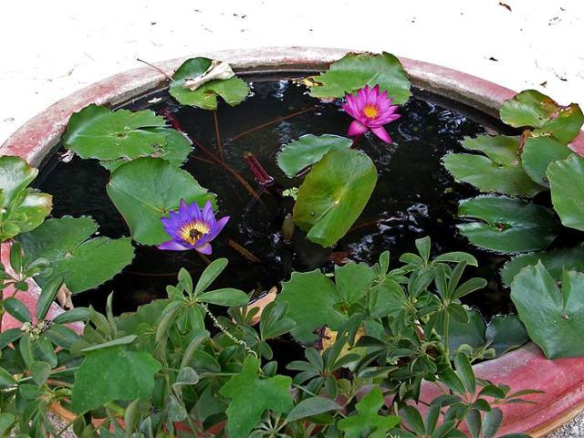 пруд с лилиями фото 1