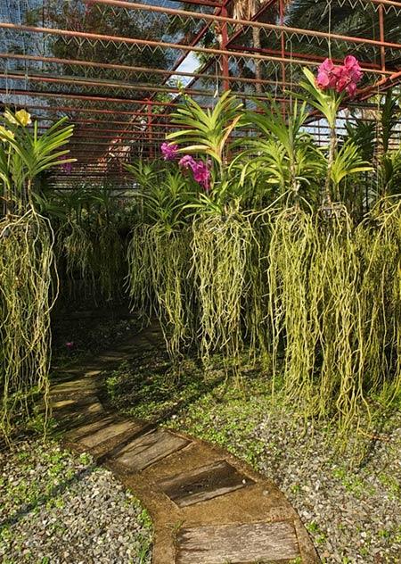 виды орхидей фото