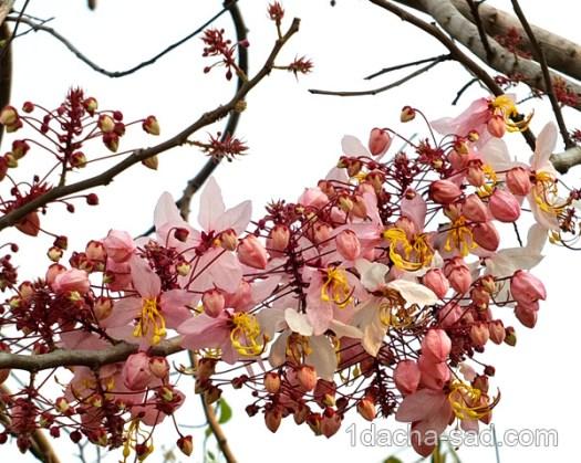 цветущие деревья фото (9)