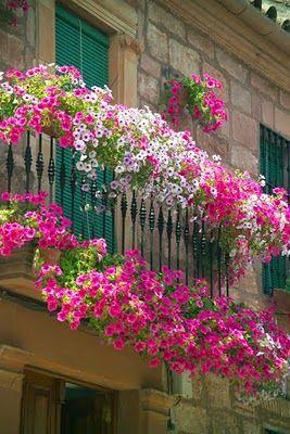 Ампельные петунии в горшках на балконе