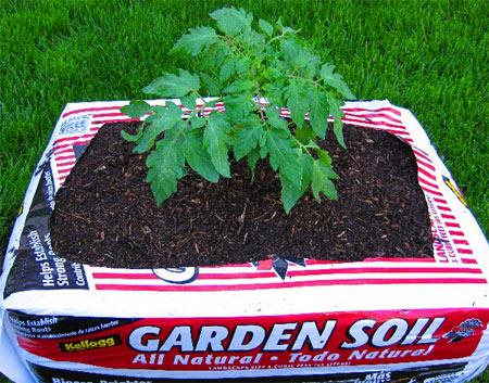 выращивание помидор в пакетах