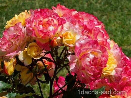 красивый розарий фото (6)