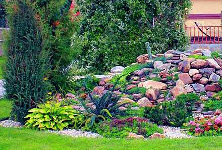 хвойные растения в рокарии