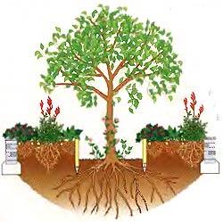 растения под деревьями