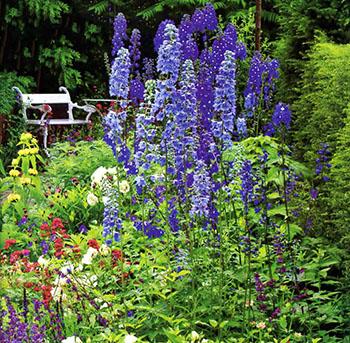 Цветущие садовые многолетники дельфиниум 2
