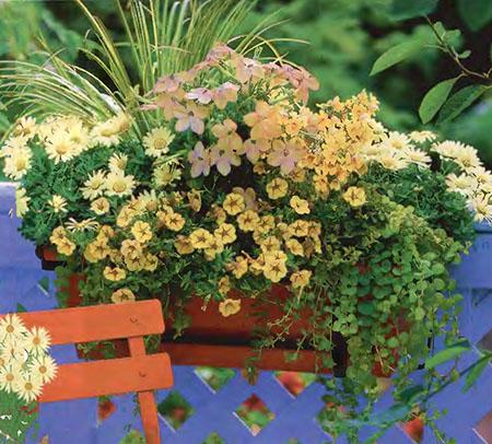 Ампельные цветы в озеленении балконов и террас 5