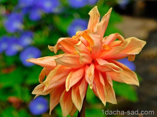 красивый сад Mae Fah Luang (22)