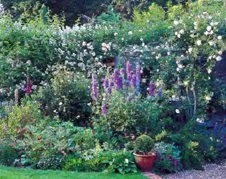 Растения и кустарники для живой изгороди 8