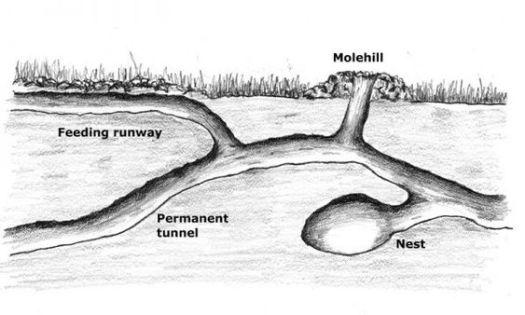 Схема кротовьей норы в разрезе