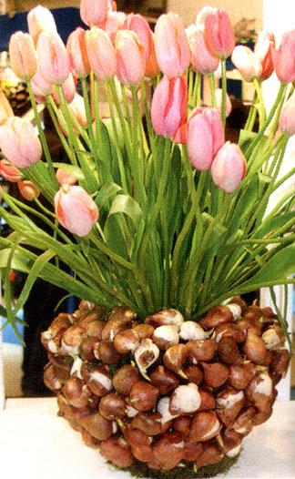 Декор цветочного горшка луковицами тюльпанов 7