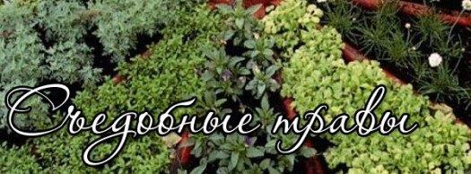 Съедобные травы 11