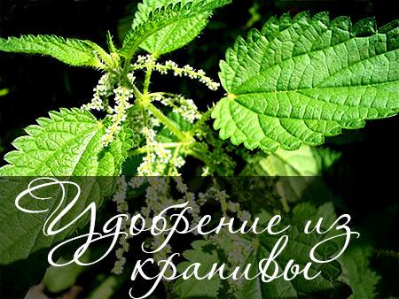 Зеленое удобрение из крапивы