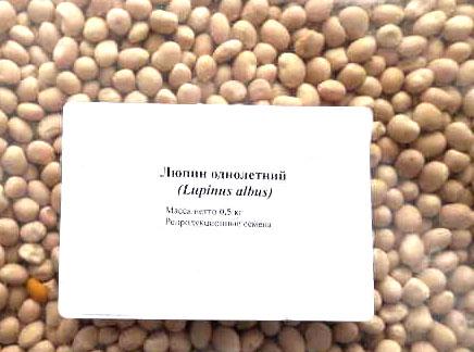 Семена люпина