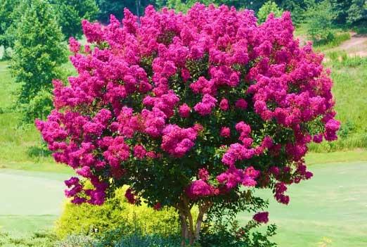 Красивые кустарники для вашего сада
