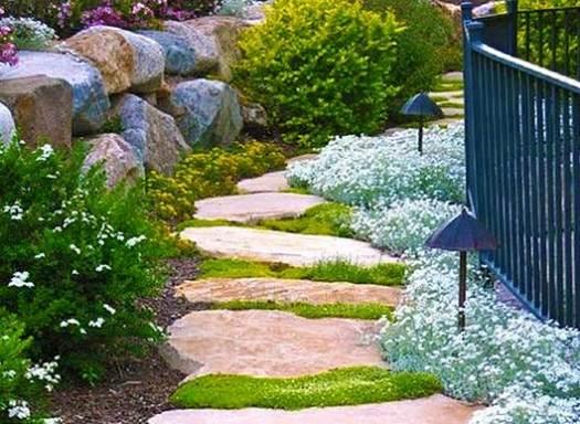 почвопокровные растения в ландшафтном дизайне на даче