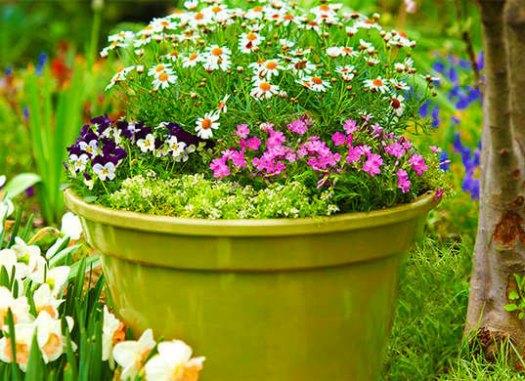 Альтернатива газону - кадочные растения