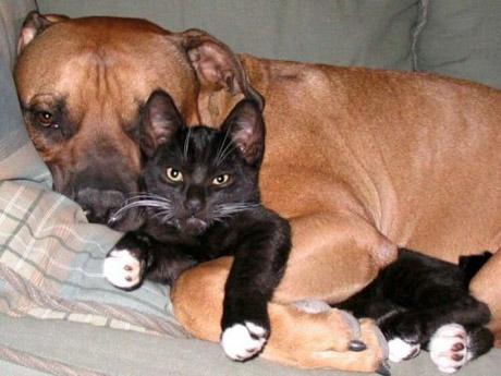 catanddogstories21an2.jpg