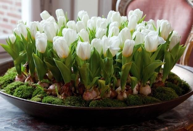 Bagaimana Menanam Tulip Di Musim Dingin Di Rumah Dalam Pot Kapan Dan Seberapa Sering Menggali Persiapan Umbi Tulip Untuk Penyimpanan Di Rumah