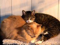 cats_6 _16_