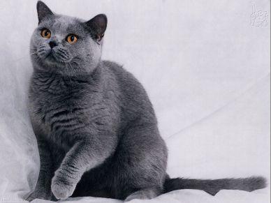 gray-kitty_2031_1024x768