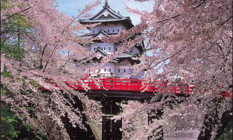 cherry-blossom-building